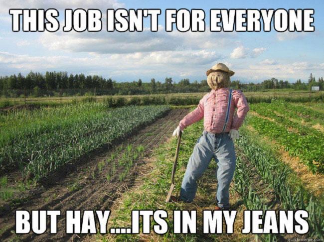 Hay… It's in my Jeans